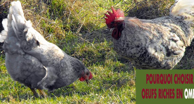 œufs-riches-en-Oméga-3-bio