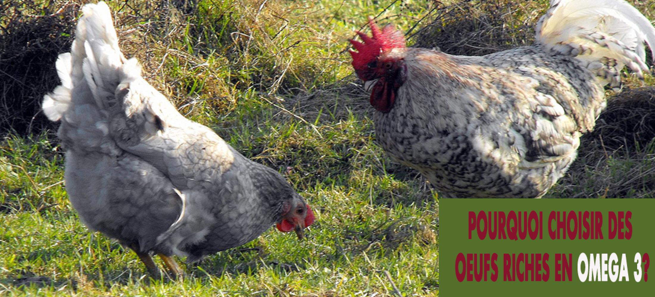 Pourquoi choisir des œufs riches en Oméga 3 avec le régime Paléo?