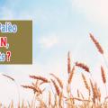 Alimentation Palèo sans gluten blé